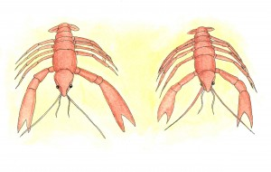 Crayfish - try a Swedish crayfish party if you get the chance...
