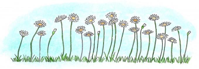 Nordic flowers