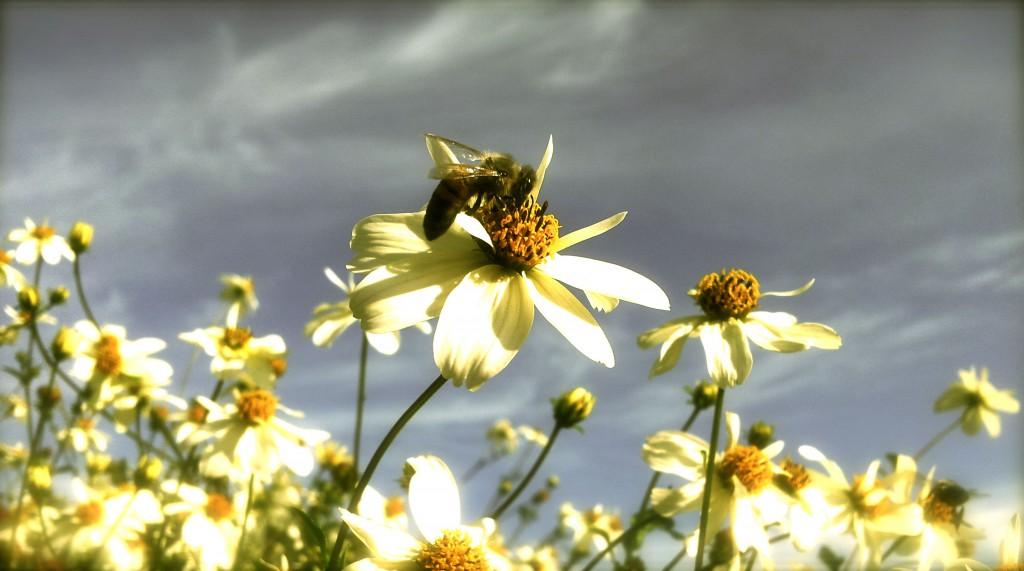 Danish Bee | Nature photography | www.karlasnordickitchen.com
