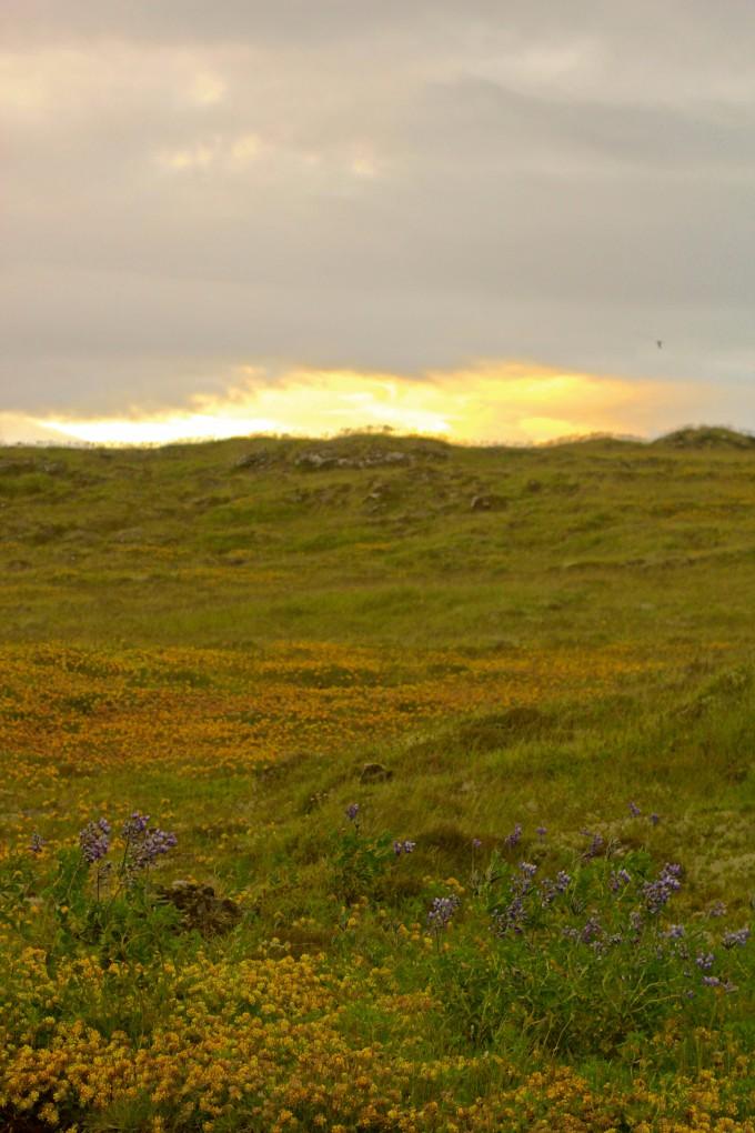 Þingvellir | Nature photography | www.karlasnordickitchen.com