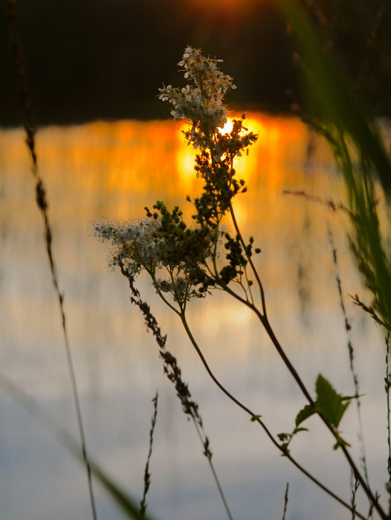 Swedish summer night | Nature photography | www.karlasnordickitchen.com