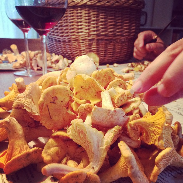 Today's catch! #chantarelle #mushroom #mushroomhunting #sweden #woods #juliekarladk #karlasnordickitchen